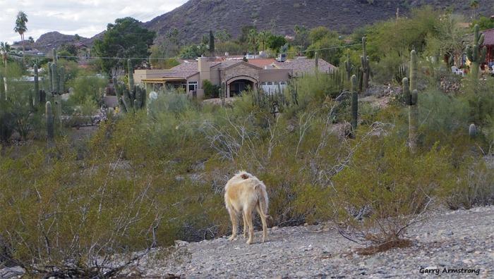 72-Desert-Dog-GAR-newer-Phoenix-Mountains-01062015_116