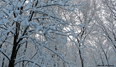 72-Morning After Snow-020616_004