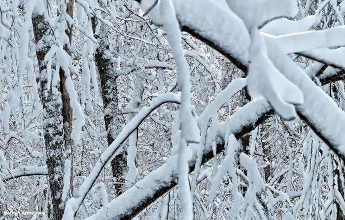 72-Snow-020616_010