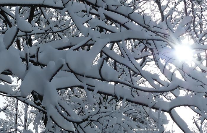 72-Snow-020616_014