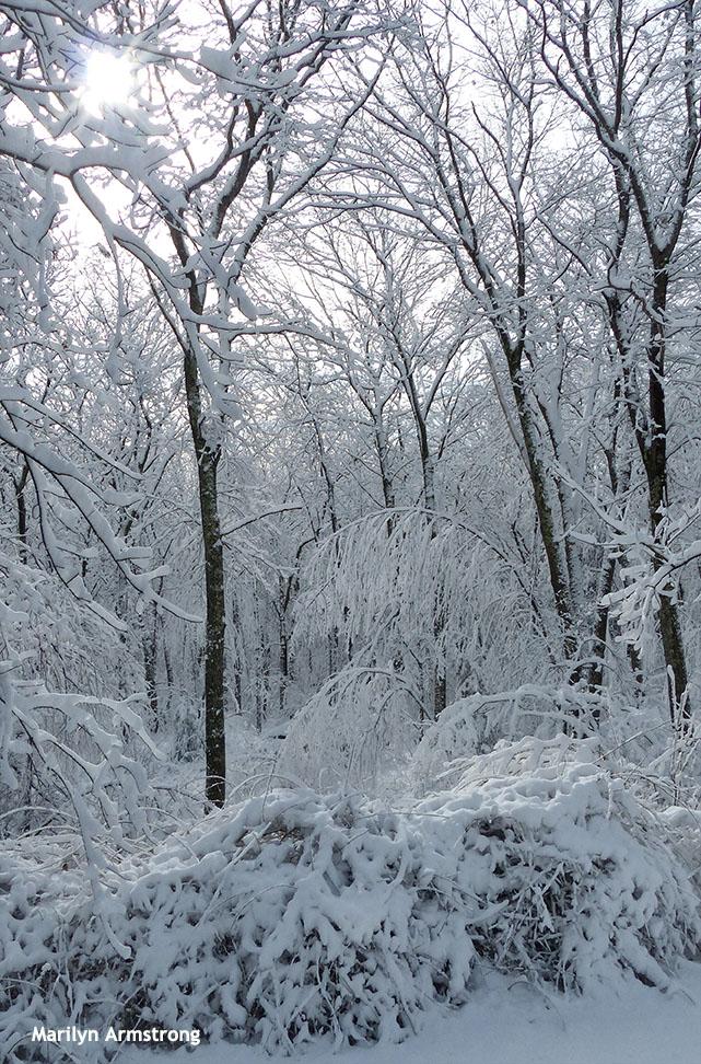 72-Snow-020616_016