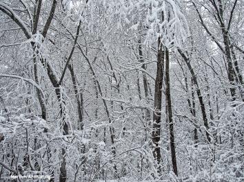72-snowy-woods-020516_08