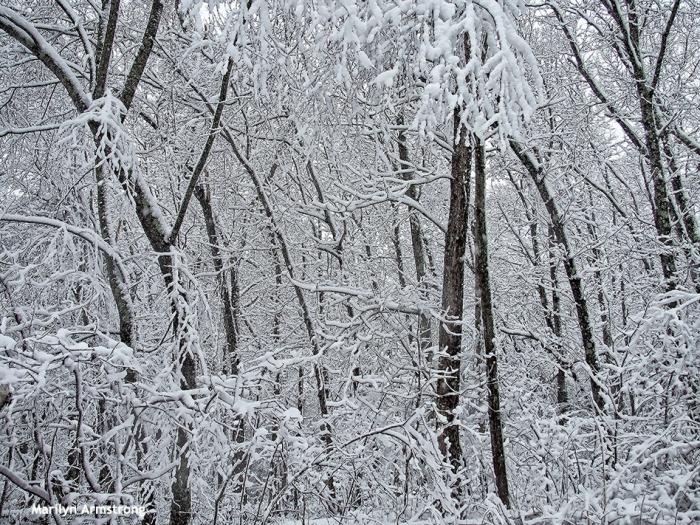 72-snowy-woods-020516_081