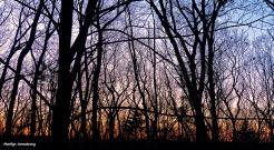72-Sunrise-022716_05