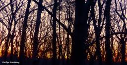 72-Sunrise-022716_07
