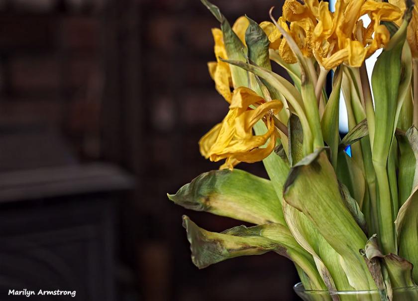 72-dead-flowers-oddballs-032416_02