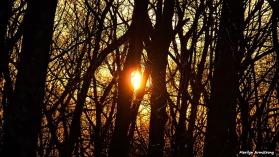 Golden Sunrise March 7, 2016