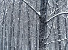 72-Last-Snow-032116_006