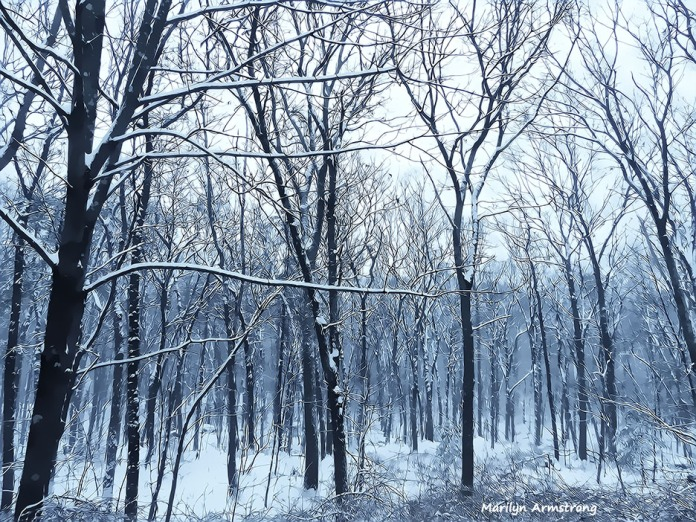 72-Last-Snow-Falling-032116_003