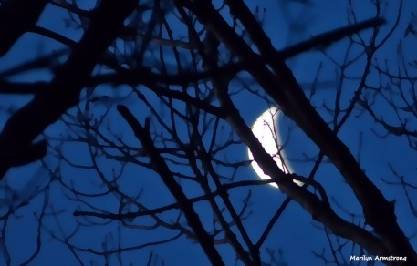 Gibbous moon at night