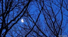 72-moon-set-030316_016
