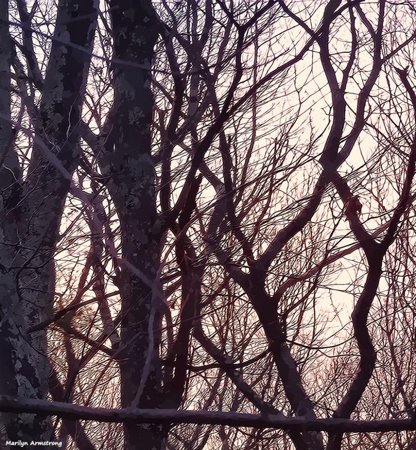 A pale dawn in March