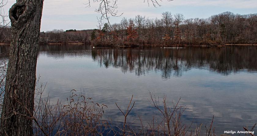 72-pond-swans-mar-030816_074