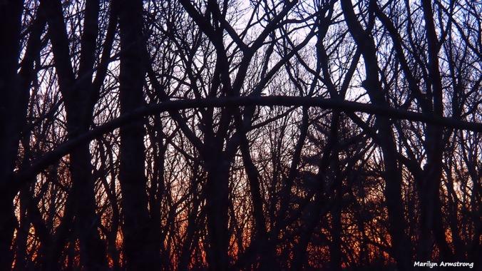 72-sunrise-030316_024