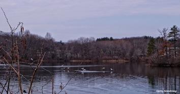 72-Swans-GAR-030816_041