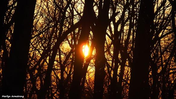 72-vector-sunrise-030716_02