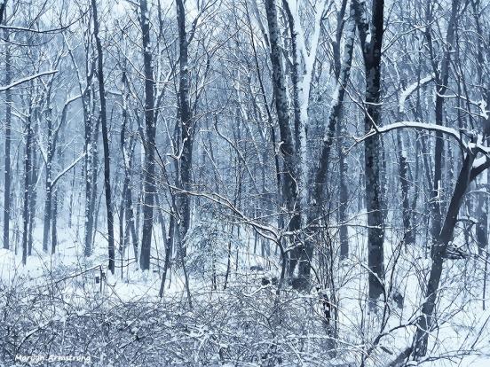 72-Wild-Woods-Last-Snow-032116_010