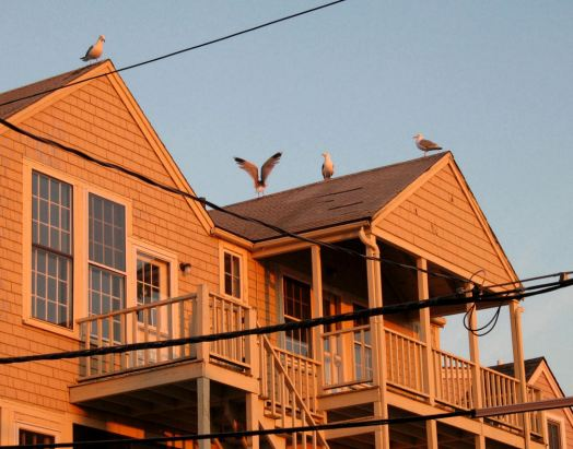 Seagulls on the roof at sunrise