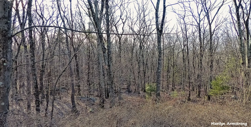 72-Almost Spring-Woods-Early-AM-030116_01