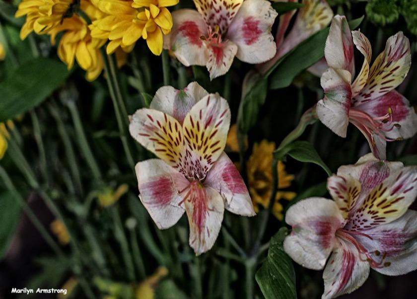 72-april-bouquet-041116_05
