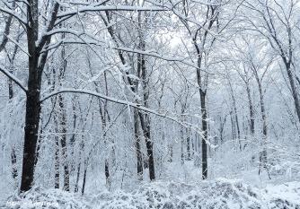 72-April-Snow-040316_01