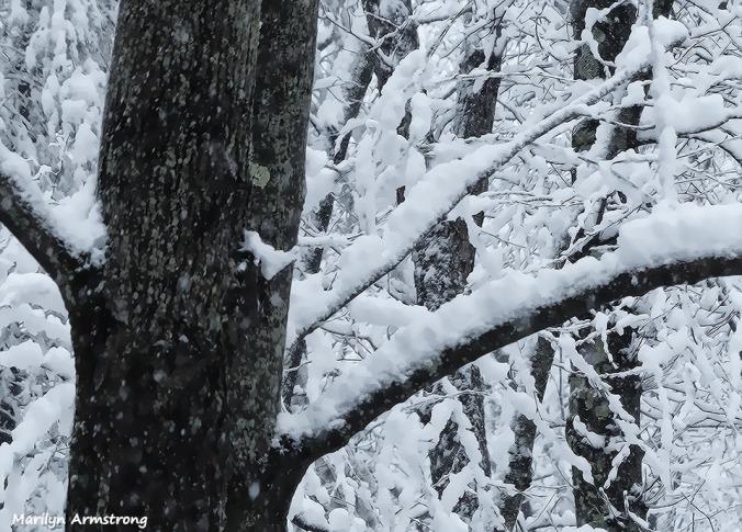 72-April-Snow-040316_02
