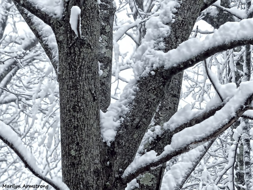 72-April-Snow-040316_04