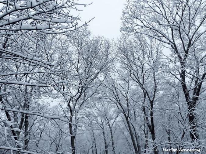 72-April-Snow-040316_07