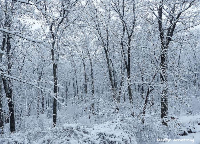 72-April-Snow-040316_08