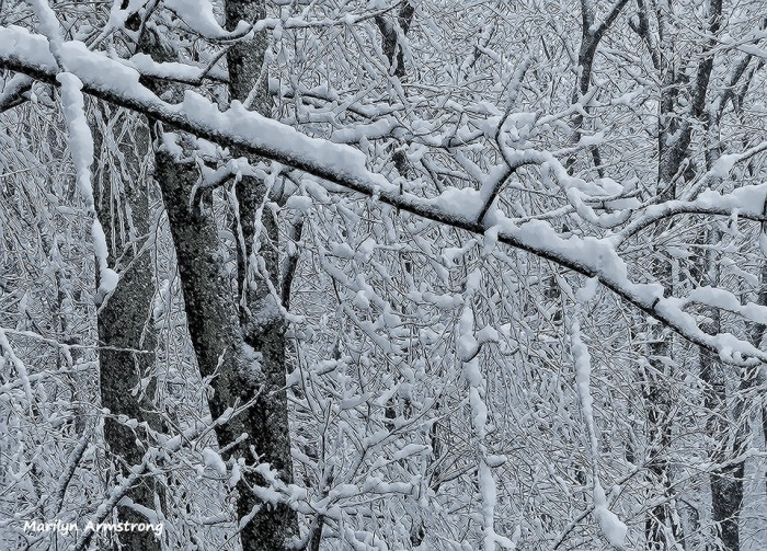 72-April-Snow-040316_09