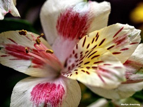 72-macro-april-bouquet-041016_05