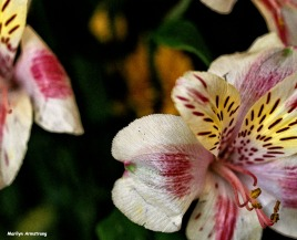 72-macro-april-bouquet-041016_21