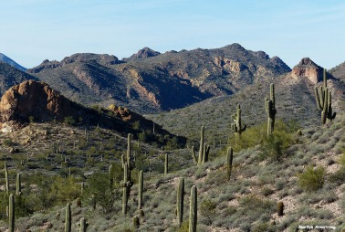 72-MAR-Saguaro-Superstition-New-011316_156
