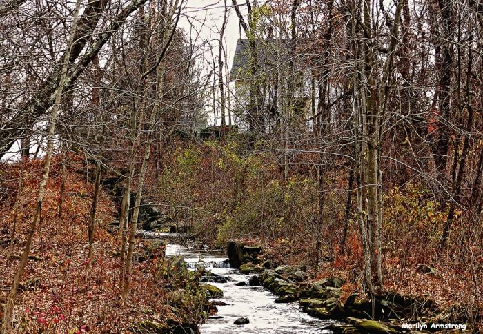 72-Stream-in-woods_03