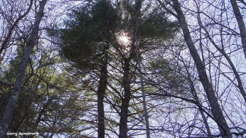 72-Treetops-Canal-GA-042716_114