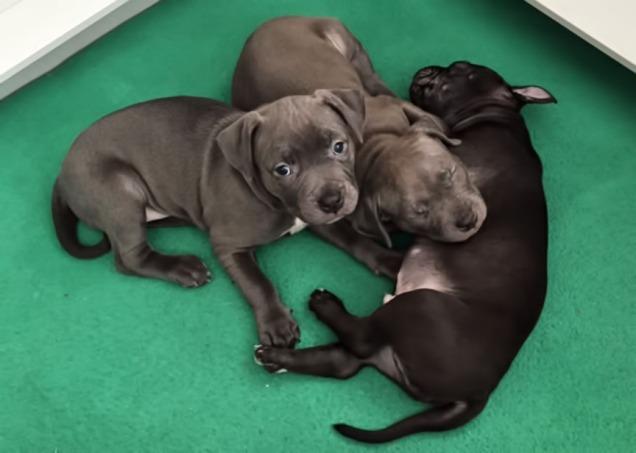 3-puppies-edit