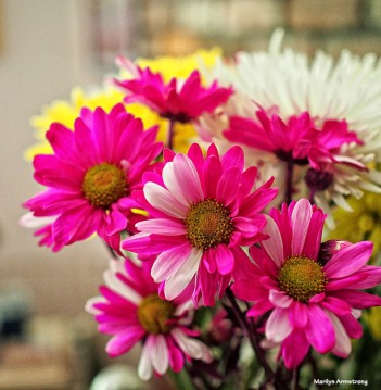 2-bouquet-daisies-052516_033