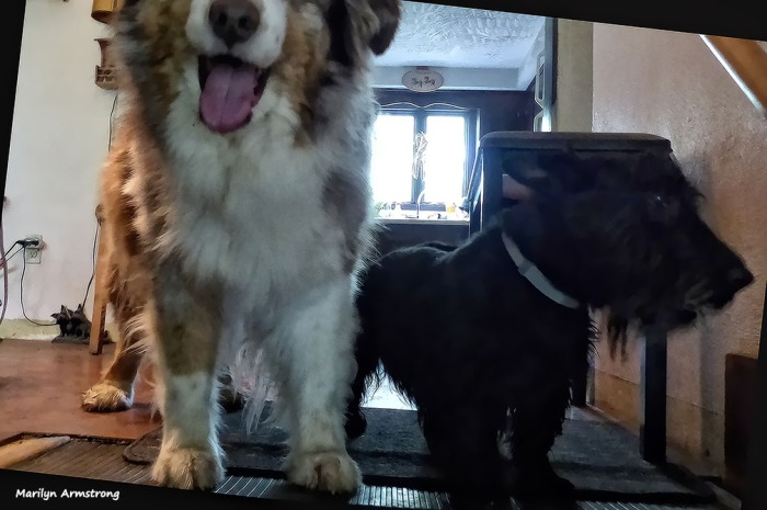 72-Dogs-Oddballs052216_46