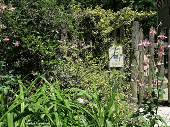 72-may-garden-052516_015