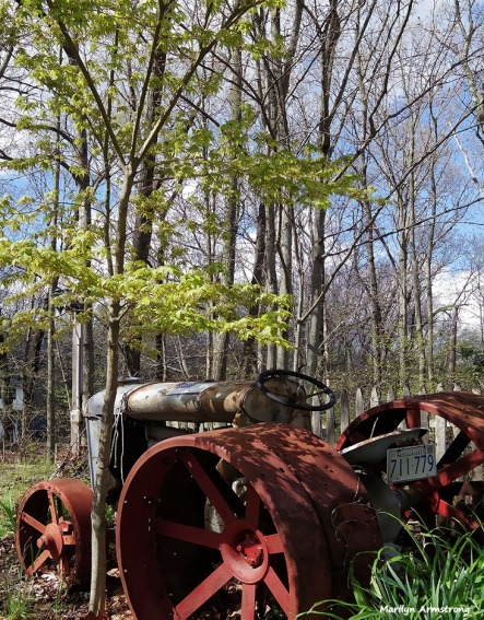 72-tractor-Japanese maple_027