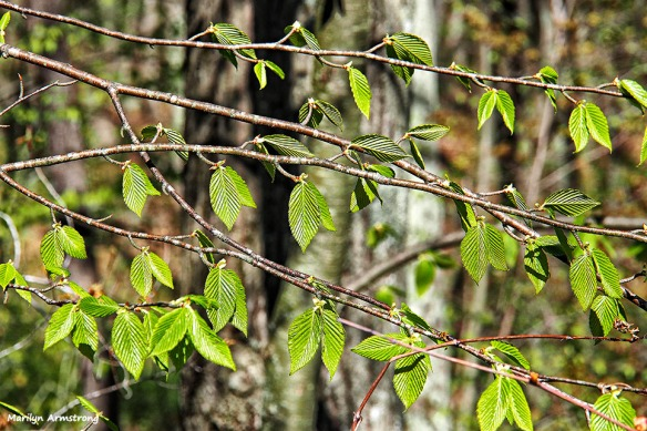 72-new-leaves-050916_008