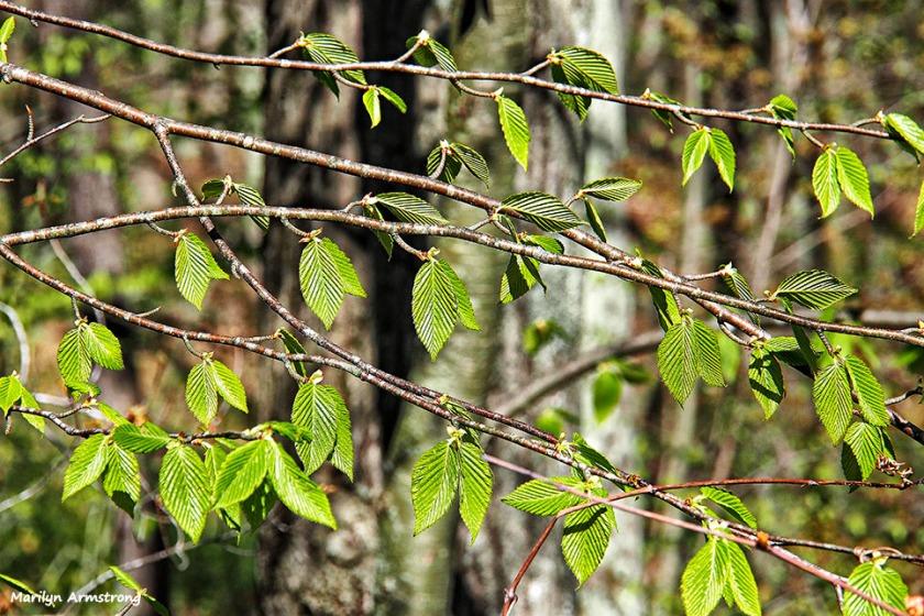 72-new-leaves-050916_008