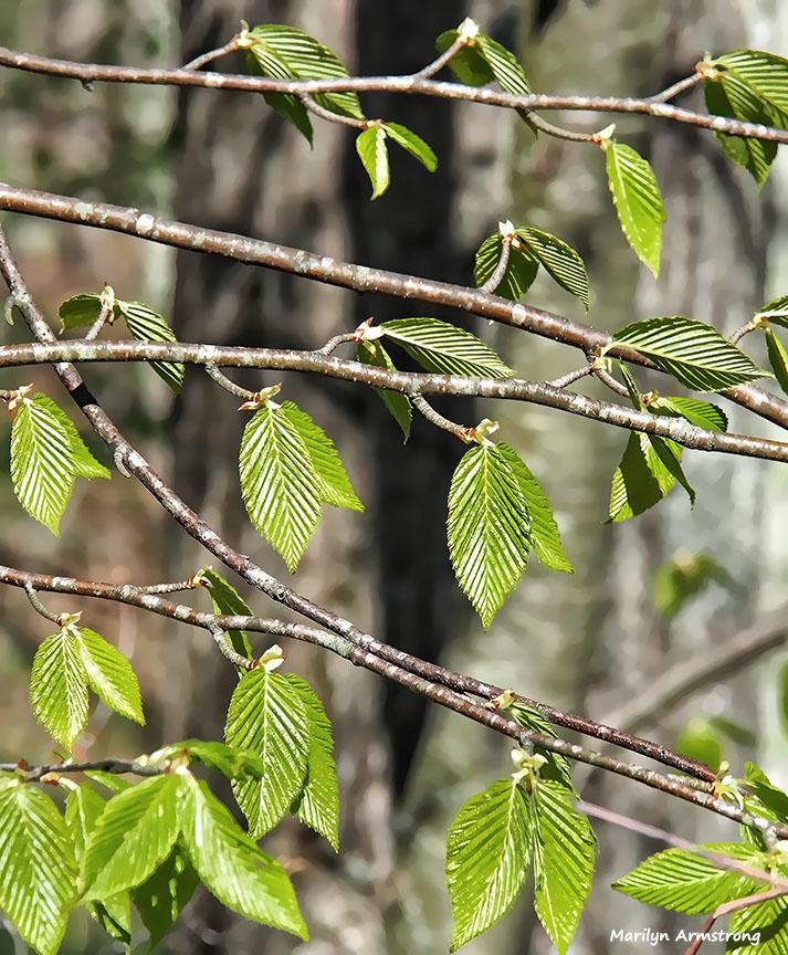 72-new-leaves-050916_008b