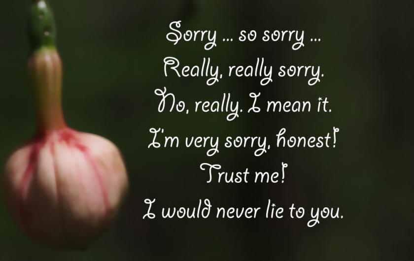 72-sorry-text-fuschia-051416_010