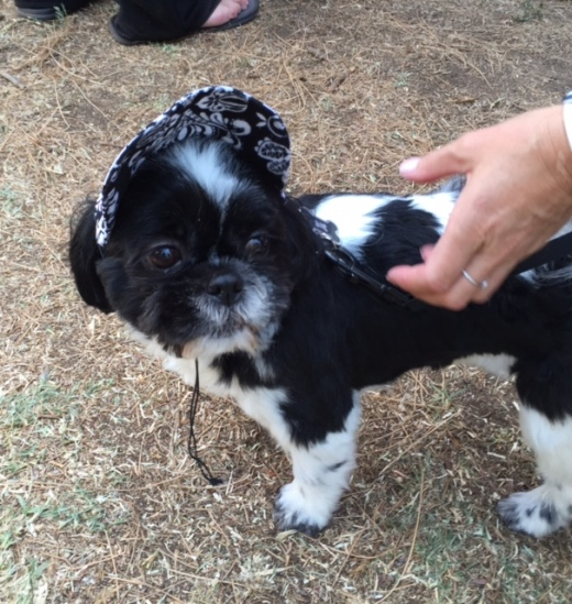 craft show dog with hat