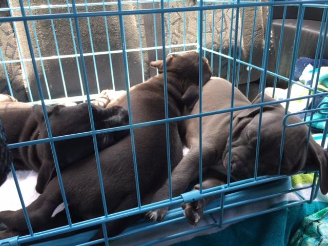 sleeping pups