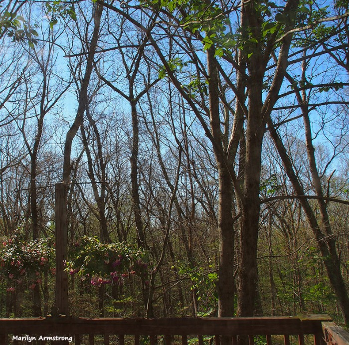 bare-trees-061516_01