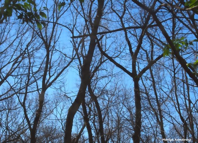 bare-trees-061516_02