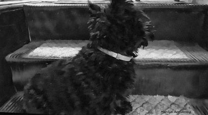 72-BW-Bonnie-Stairs-052216_49
