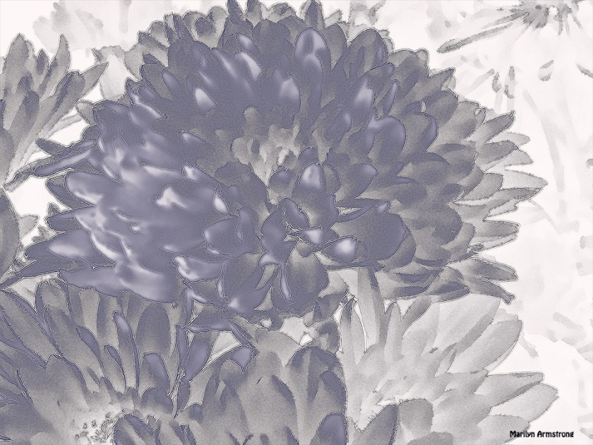 72-bw-monochrome-Chrysanthemums_5